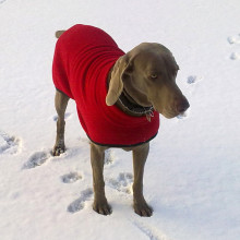 Polo Neck Coat in Red
