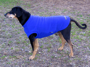 Dog Tankie in Cobalt Blue