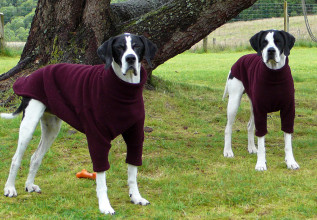 Dog Jumpers in Mulberry