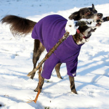 Dog Jumper in Dark Purple