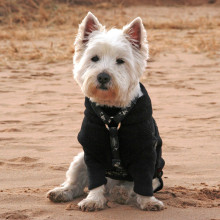 Dog Jumper in Black