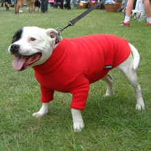 Bullie Jumper in Red