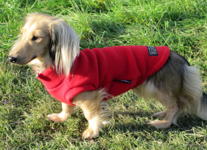 Red  Dachsie Jumper