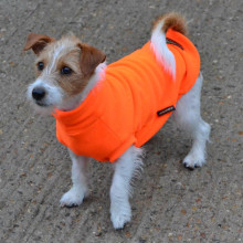 Dog Jumper in Blaze Orange