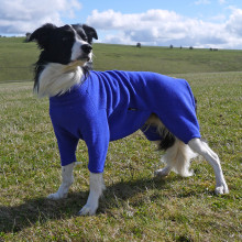 Dog Suit in Cobalt Blue