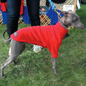 Red Italian Greyhound Jumper