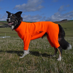 Blaze Orange Dog Suit