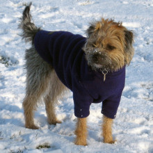 Dog Jumper in Navy