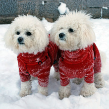 Twin Dog Suits in Red