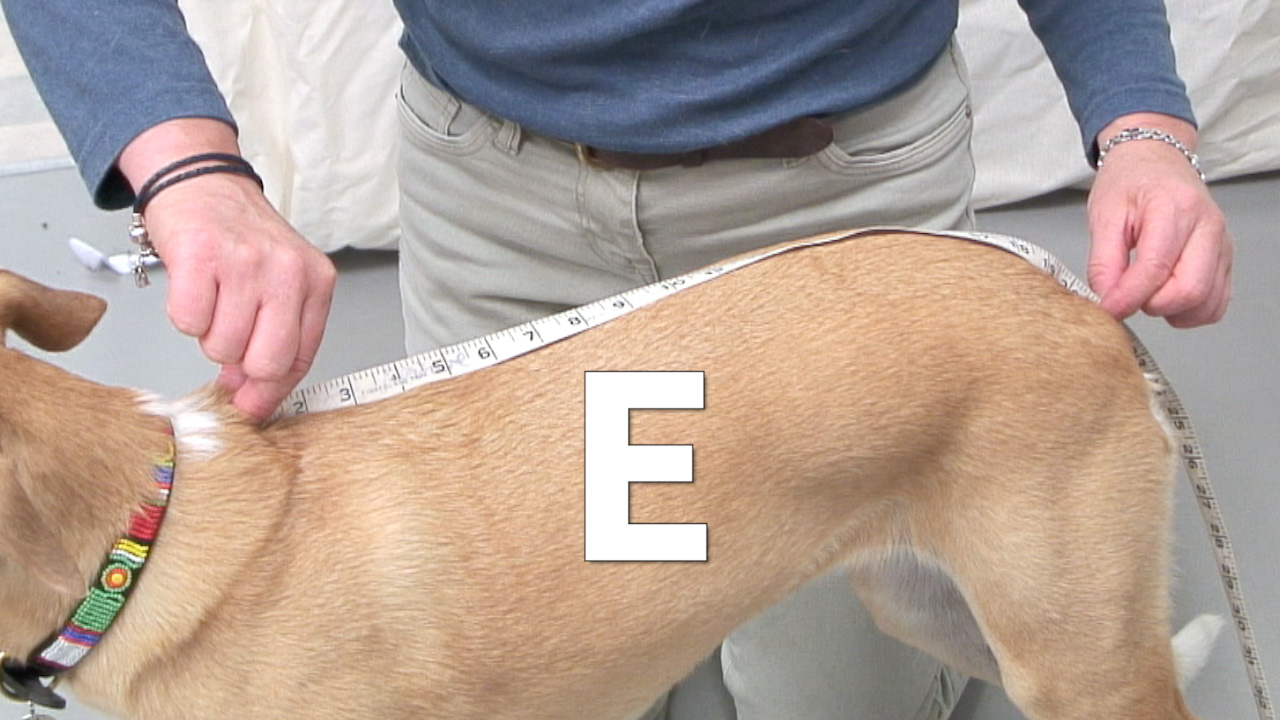 E measurement