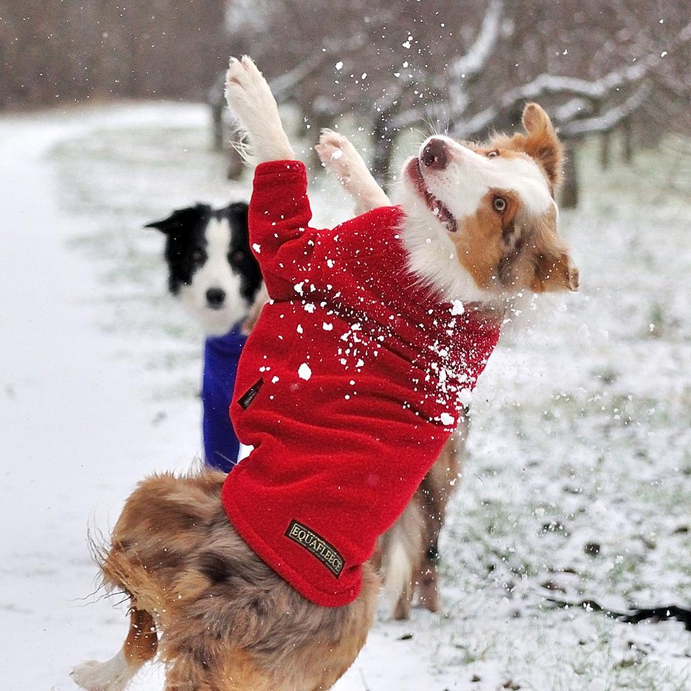 Dog Brown Fleece Jumpers Uk